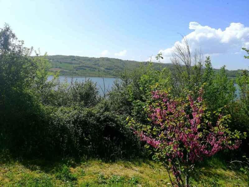 Diga oasi di Campolattaro, cespuglio fiorito con panorama