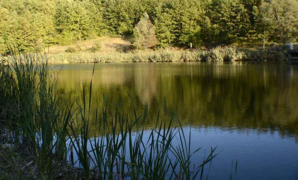 Laghetto Lupardi, foto da bordo lago con bosco riflesso nelle acque del lagho