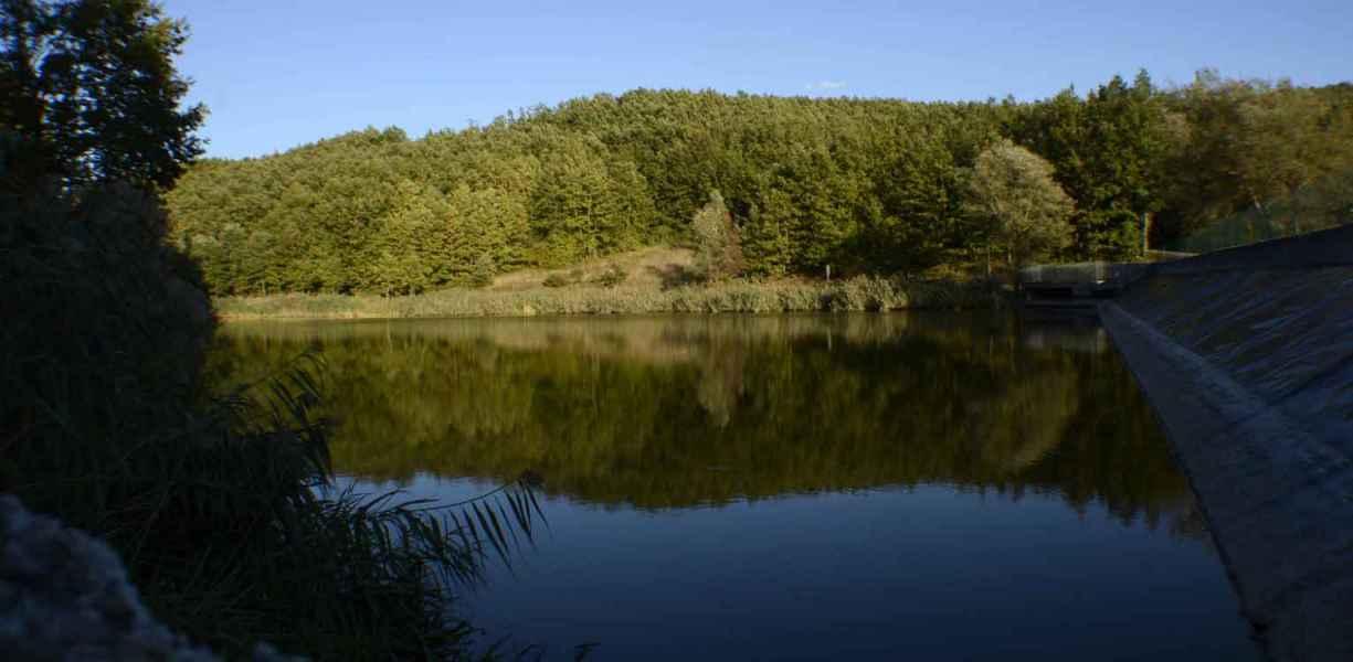 Laghetto Lupardi, bosco riflesso nelle acque del lago